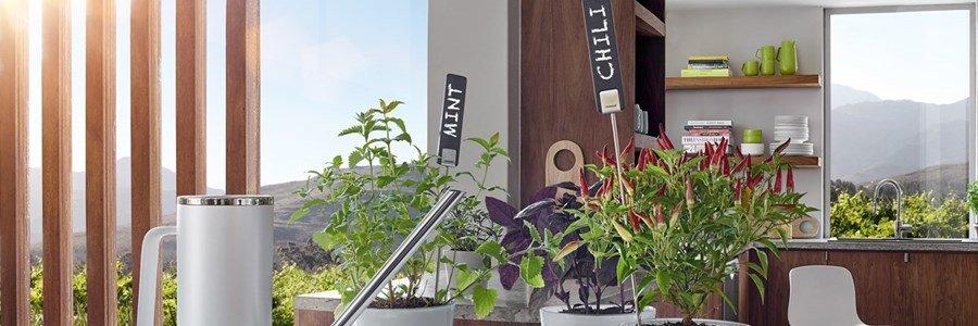 blomus planta marcadores ervas aromaticas plantas