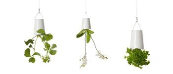 We love the suspended vases by boskke