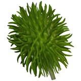 Leaf conjunto de 4 plantas chayote