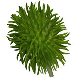 Asa Selection Leaf set of 4 plants chayote