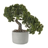 bonsai artificial plant