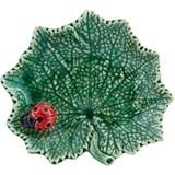 ragwort leaf with ladybug