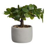bonsai ficus artificial plant