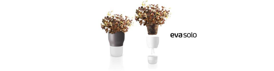vaso plantas eva solo en