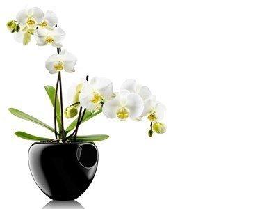 eva solo vaso orchid pot